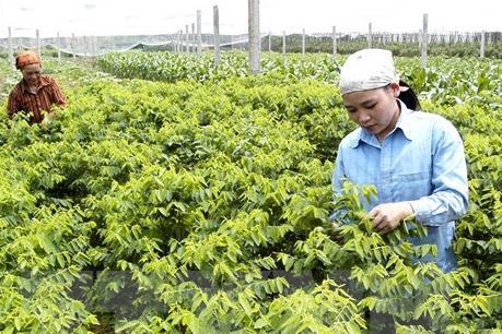 Hà Nam được cấp chứng nhận nguồn gốc xuất xứ vùng