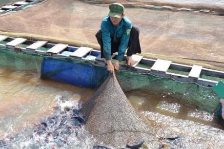 """Gỡ """"gánh nặng"""" cho doanh nghiệp, người nuôi cá tra xuất khẩu"""
