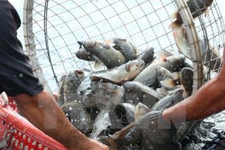 Kéo dài thời gian thông quan thủy sản qua Cửa khẩu Kim Thành
