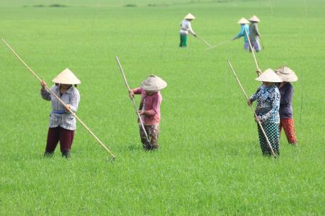 Nông nghiệp Việt Nam đối mặt với các thách thức từ TPP