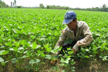 Doanh nghiệp Nhật ứng dụng công nghệ thông tin vào nông nghiệp tại Hà Nam