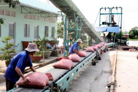 Việt Nam tạm dừng chào bán gạo 25% tấm