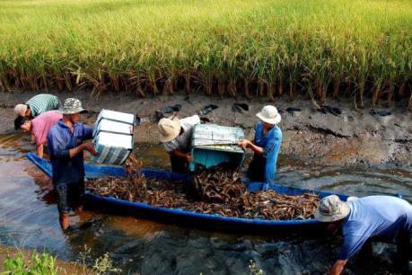 Phê duyệt quy hoạch phát triển nuôi tôm hùm đến năm 2020