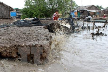 Cà Mau: Đê biển sạt lở nghiêm trọng gây hậu quả lớn tới hộ nuôi trồng thủy sản