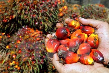 FAO: Giá lương thực tăng trong tháng 10 do thời tiết không thuận