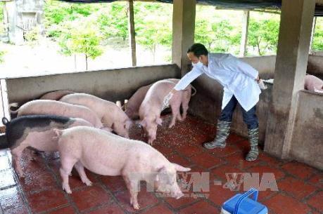 BIDV dành 1 tỷ USD cho vay phát triển chăn nuôi
