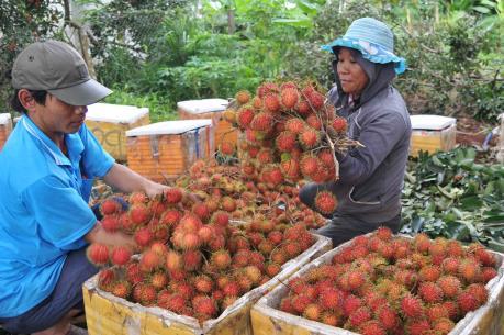 Chôm chôm Đồng Nai xuất khẩu sang Pháp