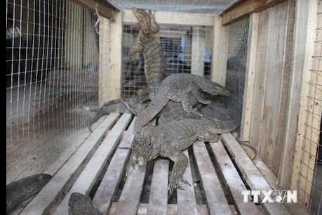 Nạn buôn bán động vật hoang dã qua internet lan rộng