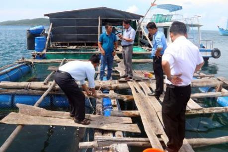 Cá nuôi lồng bè chết hàng loạt đầy bí ẩn ở Bình Thuận
