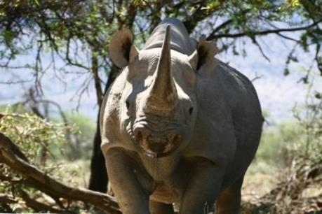 Nam Phi bãi bỏ lệnh cấm buôn bán sừng tê giác gây tranh cãi