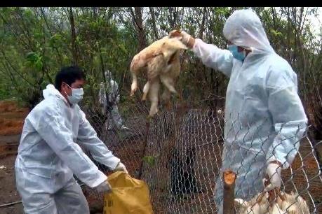 Cảnh báo về nguy cơ bùng phát dịch bệnh trên đàn gia súc, gia cầm