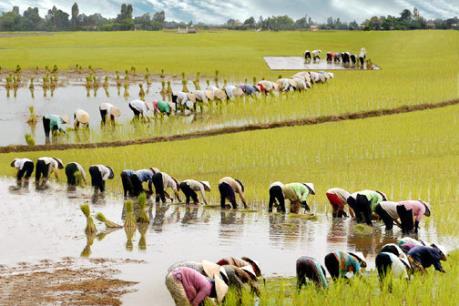 Ưu đãi cho vốn FDI đầu tư vào bốn lĩnh vực nông nghiệp