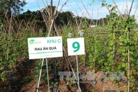 Tây Ninh chọn Nhật Bản làm đối tác phát triển nông nghiệp công nghệ cao