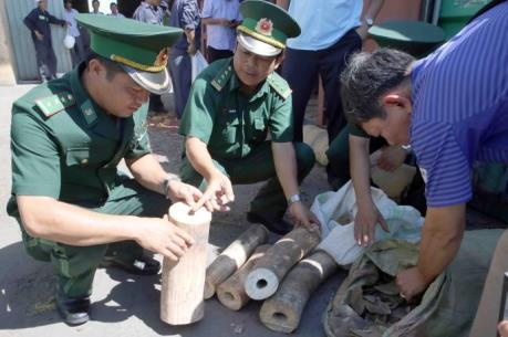 Bắt giữ hơn 180 kg ngà voi tại sân bay Nội Bài