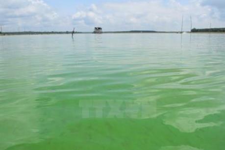 """Ô nhiễm môi trường, sông Sài Gòn đang """"hấp hối"""""""