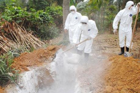 Bà Rịa-Vũng Tàu tiêu hủy 42.000 con gia cầm nhiễm H5N1