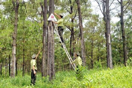 Đối tác hỗ trợ ngành lâm nghiệp cũng tập trung ứng phó với biến đổi khí hậu