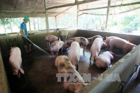 Giá thức ăn chăn nuôi ổn định, nông dân có lợi