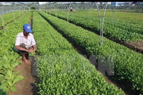 Quảng Ninh kêu gọi doanh nghiệp đầu tư vào nông nghiệp