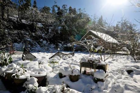 Xuất hiện băng trên nền nhiệt 1,4 độ C tại Sa Pa