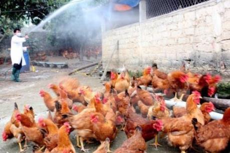 Cảnh báo nguy cơ dịch cúm A (H7N9) xâm nhập vào Việt Nam