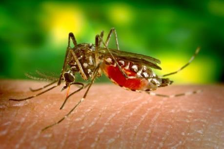 Brazil cho phép sử dụng vaccine ngừa sốt xuất huyết