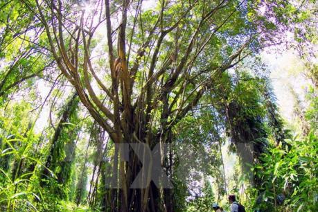 Xuất khẩu gỗ và các sản phẩm gỗ của Việt Nam đang có nhiều thuận lợi