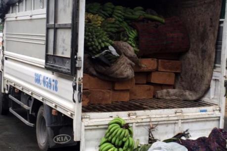Thừa Thiên - Huế: Bắt giữ 2 vụ vận chuyển gỗ lậu, thực phẩm không rõ nguồn gốc
