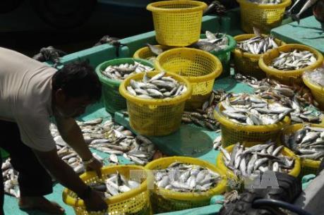 Năm 2016, xuất khẩu nông-lâm-thủy sản có thể vượt ngưỡng 31 tỷ USD
