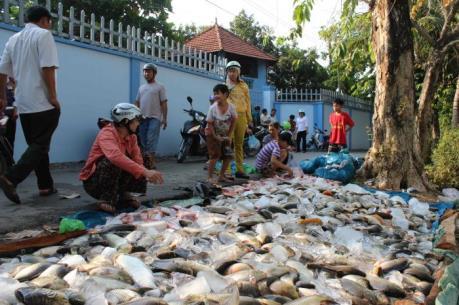 Xác định nguyên nhân cá chết hàng loạt trên sông Đồng Nai