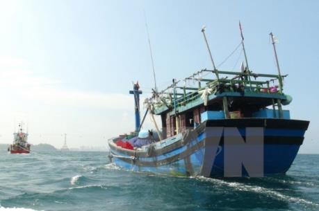 Vụ tàu cá của Bình Định bị đâm chìm: Các cơ quan Việt Nam đang xác minh, điều tra thủ phạm