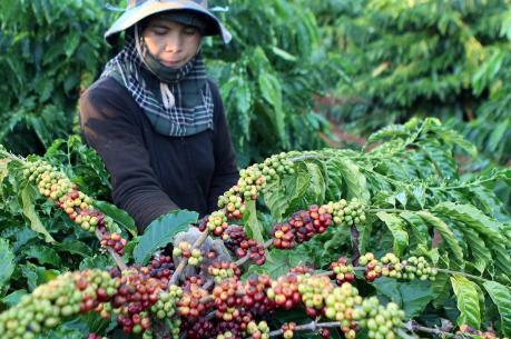 """Nhận diện """"điểm yếu"""" của cây công nghiệp Việt Nam"""