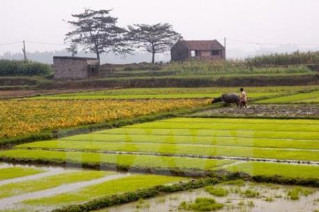 Gần 92% diện tích đã có nước gieo cấy