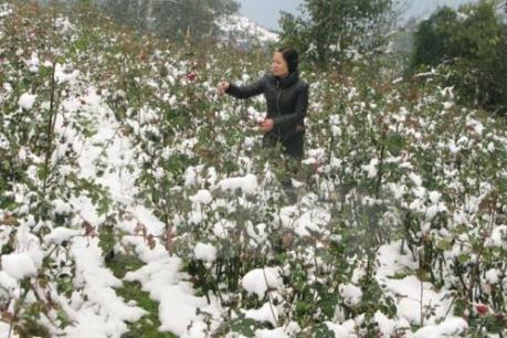 Dự báo thời tiết: Từ 23-27/1, Bắc Bộ rét đậm, vùng núi có thể có mưa tuyết