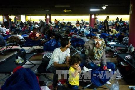 Vấn đề người di cư: IMF hối thúc EU mở cửa thị trường việc làm cho người tị nạn
