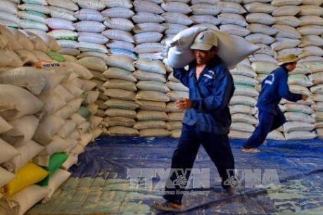 Cấp gạo miễn phí cho các hộ chính sách ở Lào Cai và Quảng Trị