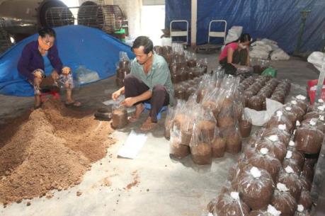Xuất hiện tình trạng khai thác cạn kiệt cây dược liệu ở Kon Tum