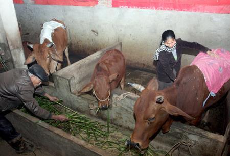 Quảng Ninh: Tăng cường chống rét đậm, rét hại xuống từng thôn, bản