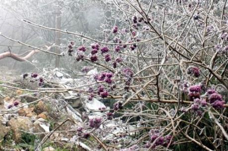 -7 độ C khiến băng tuyết phủ trắng rừng Phja Oắc