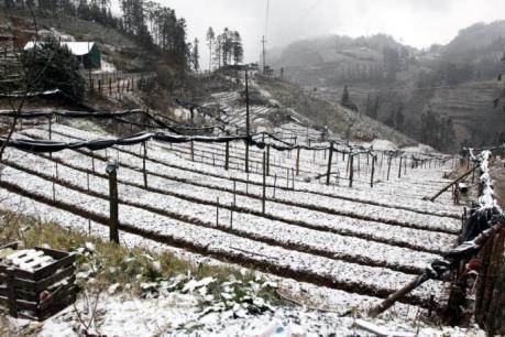 Tuyết rơi dày tại Sa Pa