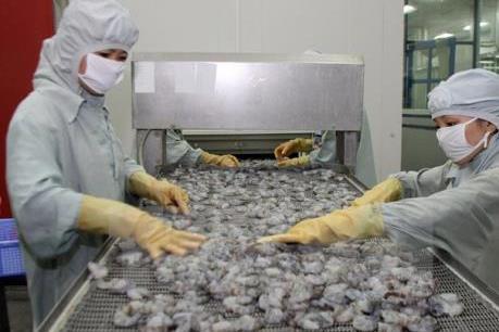 """Ngành tôm xuất khẩu có nguy cơ """"bỏ trống"""" thị trường 800 triệu USD"""