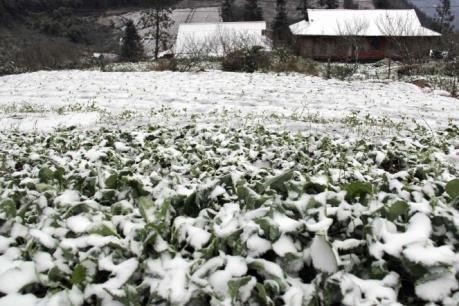 Bí quyết giúp nông dân bảo vệ cây trồng, vật nuôi trước rét hại