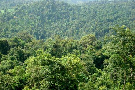 Phát triển hệ thống thông tin quản lý rừng
