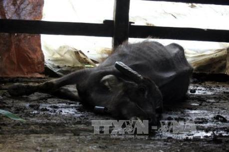 Hơn 8.900 gia súc bị chết, các tỉnh tập trung khắc phục hậu quả sau rét