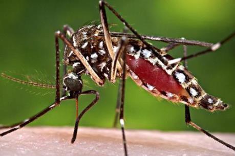Nam Mỹ nỗ lực đối phó với virus Zika
