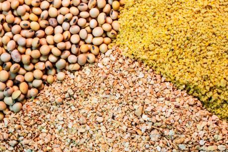 HPG: Hòa Phát chi 2.500 tỷ đồng thành lập công ty nông nghiệp