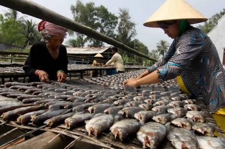 Thu nhập 50 - 70 triệu đồng/hộ nhờ làm cá khoai khô