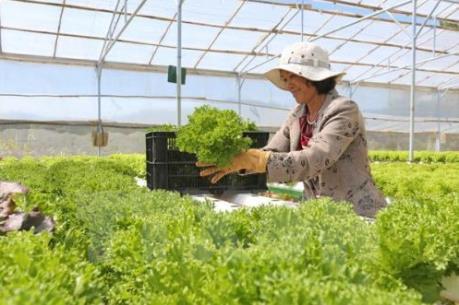 Cà Mau ưu tiên phát triển ba nhóm nông sản sạch