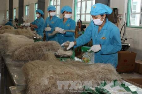 Đam mê tạo thương hiệu từ nông sản Việt