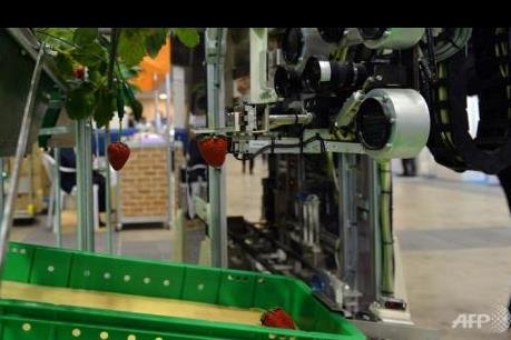 Nhật Bản giới thiệu nông trại tự động hóa đầu tiên trên thế giới